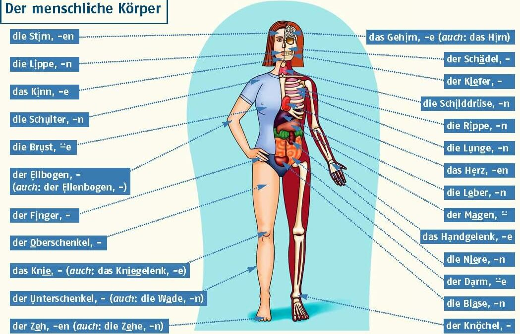 ۸۰ لغت مربوط به اعضای بدن به زبان آلمانی